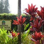 Dole  Plantation,  O'ahu,  Hawaii