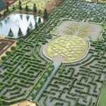 World biggest pineapple maze