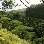 Bamboo forest, Kaumahina State Park