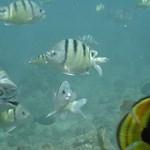 Hanauma Bay in the sea