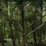 Arboretum, Waimea Valley