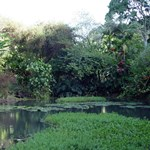 Lagoon, Waimea Valley