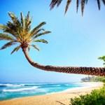 Sunset Beach palm tree