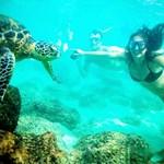 Snorkel with Hawaiian green sea turtles.