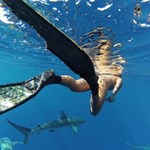 Photo of One Ocean Diving - Haleiwa, HI, United States