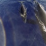 whales-and-mountains-oahu-3