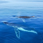 whales-and-mountains-oahu