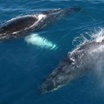 whales-and-mountains-oahu-4