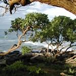 Evening on Kauai