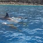 Kealakekua Dolphins, Hawaii