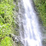 Manoa Waterfall Adventure 06
