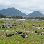 kayak kailua bird sanctuary.jpg