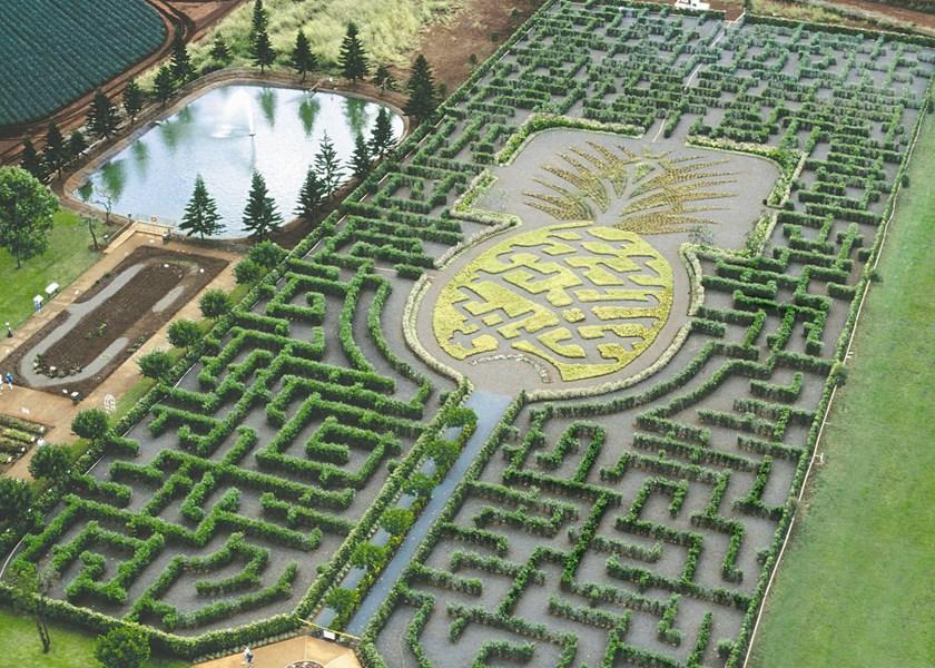 Dole Pineapple Plantation Wahiawā Oahu Hawaii