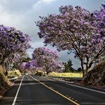 Haleakala highway