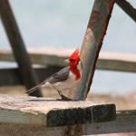 Bird on Picknick bench Kualoa Regional Park