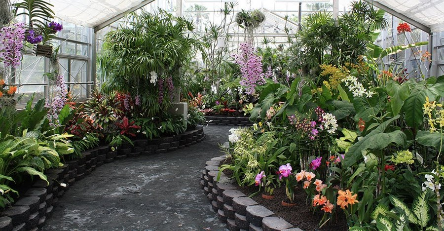 Exceptionnel Foster Botanical Garden, Honolulu
