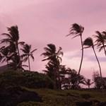 Makapu'u palms at the shore