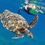 Turtle tours