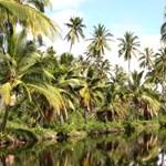 Coco Palms Grove