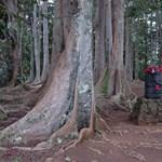 Sacret Forest near Kauai's Hindu Monastery, Kaua'i