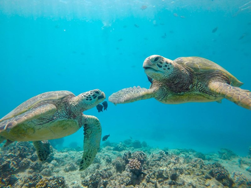8 Snorkel Tours On Oahu Live In Hawaii